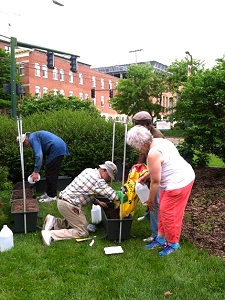 Planting a food garden