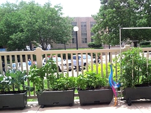 Container garden relocated to patio