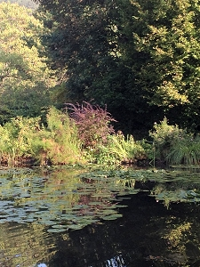 Lily ponds, a famous subject of Monet's paintings