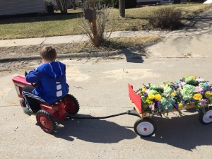 Floral arrangements delivered to Jo's car by wagon and pedal power